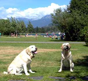 Pet Friendly Whistler Hotels - Rainbow Park